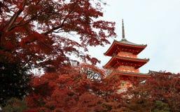 Pagode drei Schicht des Dachs mit Rot verlässt auf dem Baum des Herbstes an Kiyomizu-Tempel stockfotos