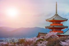 Pagode mit Himmel- und Kirschblüten auf dem Hintergrund Stockfotos