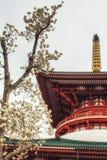 Pagoden av fred och magnolian blomstrar framtill Royaltyfri Bild