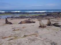 Pagos ¡ GalÃ, лев ‹â€ ‹â€ моря Стоковое Изображение RF
