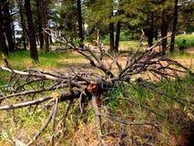 Pagosa wiosny, Colorado zdjęcia stock