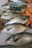 Pagro di Salema - pesce di sarpa Immagine Stock Libera da Diritti