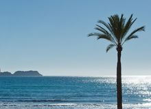 Paguera beach in brilliant winter sunlight. Solo palm in brilliant winter sunlight and ocean horizon on a sunny day in Mallorca, Spain Stock Photo