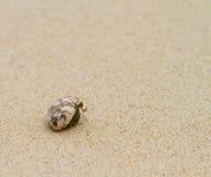 Pagurian on beach Royalty Free Stock Photos