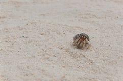 Pagurian på stranden Royaltyfria Foton