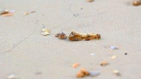 Paguro che cammina sulla spiaggia stock footage