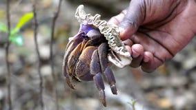 Paguro, isola del chumbe immagine stock libera da diritti