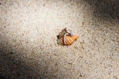 Paguro nella sabbia Fotografia Stock Libera da Diritti