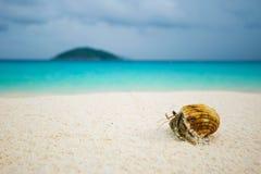 Paguro su una spiaggia Fotografia Stock Libera da Diritti