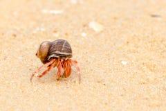 Paguro sulla spiaggia di Phuket Fotografia Stock