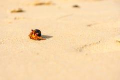 Paguro sulla spiaggia di sabbia bianca Immagini Stock