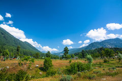 Pahalgam in june end Royalty Free Stock Photos