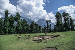 Pahalgam Srinagar Cachemire de Baisaran photographie stock