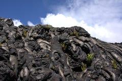 Pahoehoe熔岩和蕨 免版税库存照片