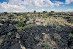 Pahoehoe lava. Desert vegetation on lava.  Valley of  Fires Recr Stock Images