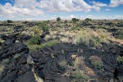 Pahoehoe lava Ökenvegetation på lava Dal av bränder Recr Arkivbilder