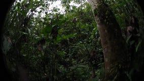 Pahuma-Orchideenreserve stock footage