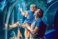 Pai e filho que olham peixes em um aquário do túnel foto de stock