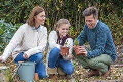 Pai feliz Mother Daughter Gardening da criança da menina da família Foto de Stock