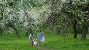 Pai, mãe e duas filhas andando no parque da mola no jardim de florescência da árvore filme