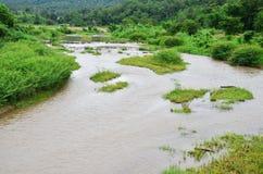 Pai River på Mae Hong Son Thailand Arkivbilder