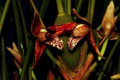 Pai van prachtige orchideeën Stock Afbeelding