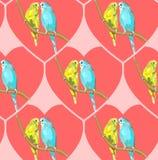 Paia degli agapornis fischeri di piccioncini Fotografie Stock