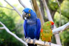 Paia del pappagallo Immagine Stock