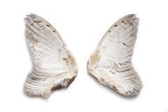 Paia delle ali del gufo Fotografie Stock Libere da Diritti