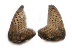 Paia delle ali del gufo Fotografie Stock