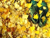 Paia di vecchie scarpe consumate misere nere nel fogliame giallo di caduta immagine stock libera da diritti