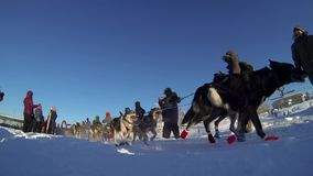Paige Drobney at the Yukon Quest stock video