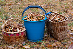 Pail and basket with mushruums. In autumn forest stock photo