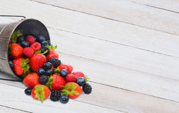 Pail with Berries Spilling on Wood Table. A pail laying on its side with assorted berries spilling on to a rustic white wood table. Horizontal format with copy stock images