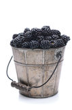 Pail of Fresh Picked Blackberries stock image
