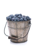Pail of Fresh Picked Blueberries. A pail full of freshly picked blueberries. Vertical format isolated on a white background with slight reflection royalty free stock photos