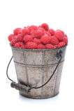Pail of Fresh Picked Raspberries. A pail full of freshly picked raspberries. Vertical format isolated on a white background with slight reflection Stock Photography