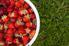 Pail of fresh strawberries on green grass Stock Photo