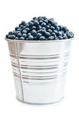 A pail full of freshly picked blueberries. Vertical format isolated on a white background Royalty Free Stock Photography