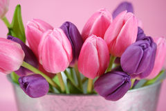 Pail full of tulips Stock Images