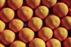 Pail of oranges. Orange fruits. Oranges ready for sale. Ju. Lots of fresh oranges fruits plucked from branch of orange tree royalty free stock photography