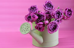 Pail of Roses. Vibrant pink roses in a green watering pail royalty free stock photos
