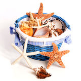 Pail of Seashells and Starfish Stock Photos