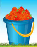 Pail with strawberries Stock Image