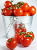 Pail of Tomatoes. Juicy, red tomatoes in a metal pail Stock Photo