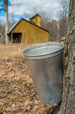 Pail used to collect sap. Of maple trees to produce maple syrup in Quebec, with a sugar shack in the background royalty free stock photo