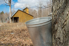 Pail used to collect sap of maple trees Royalty Free Stock Images