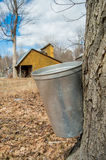 Pail used to collect sap of maple trees Royalty Free Stock Photos
