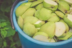 Pailful of the ripe cut pears/pailful of the ripe cut pearsm, top view royalty free stock photos