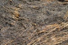 Paille brûlante dans la plantation de riz images libres de droits